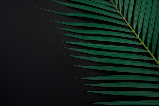 Folhas de palmeira tropical sobre fundo de cor preta.