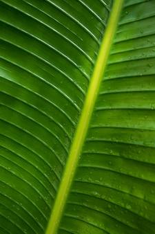 Folhas de palmeira tropical textura em gotas de água, close-up