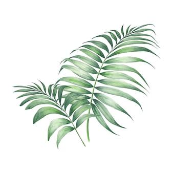 Folhas de palmeira tropical