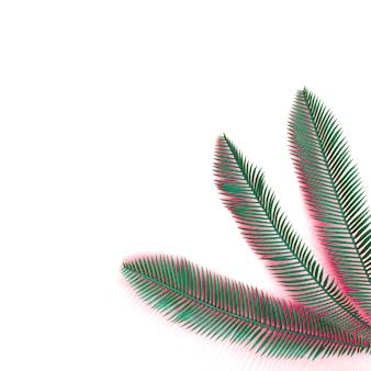 Folhas de palmeira verde com sombra de coral na esquina do fundo branco