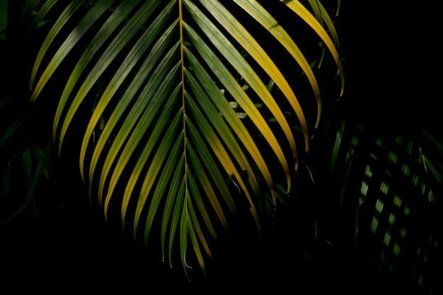 Folhas de palmeira verde e amarela na floresta