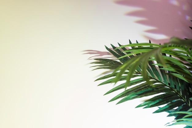 Folhas de palmeira verde e sombra no fundo branco