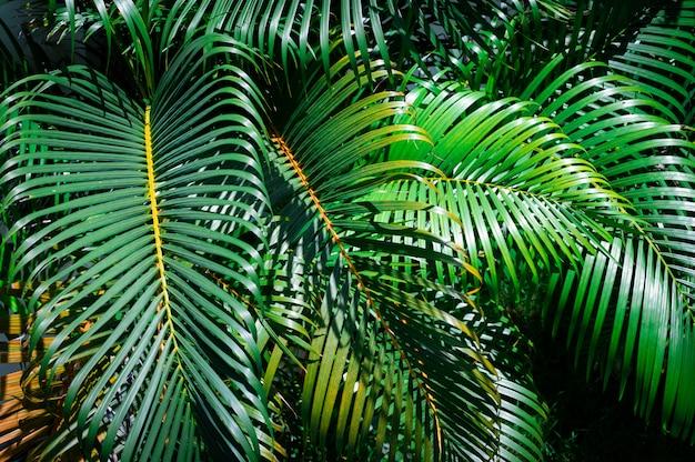 Folhas de palmeira verde no jardim