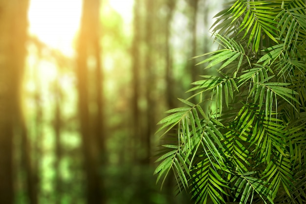 Folhas de palmeira verde