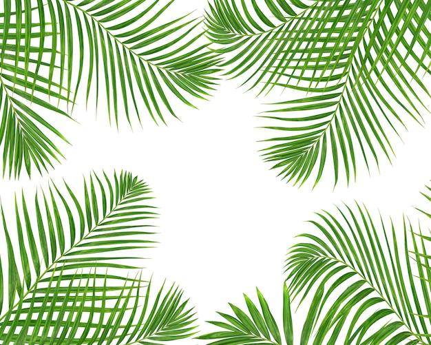 Folhas de palmeira verdes em fundo branco