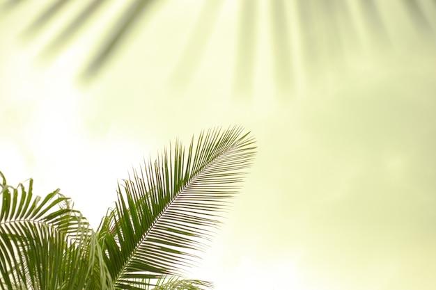 Folhas de palmeira verdes em um fundo verde claro