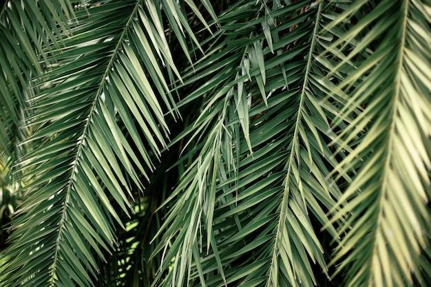Folhas de palmeira verdes fecham o fundo