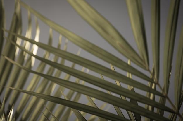 Folhas de palmeira