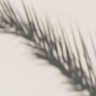 Folhas de palmeiras tropicais e sombras de luz do sol em parede bege neutra