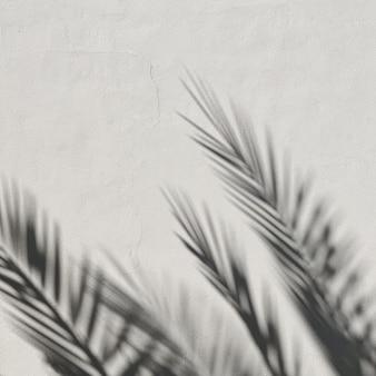 Folhas de palmeiras tropicais e sombras de luz do sol em parede branca neutra