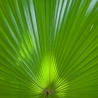 Folhas de palmeiras