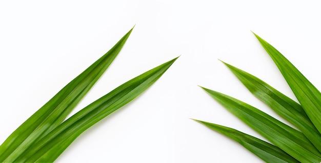 Folhas de pandan verdes frescas em fundo branco.