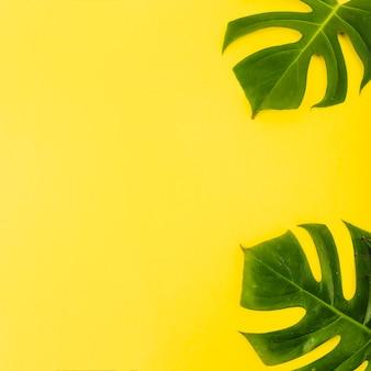 Folhas de plantas enormes de fundo brilhante