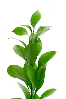 Folhas de plantas exóticas isoladas