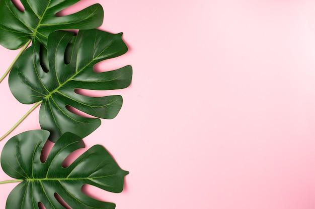 Folhas de plantas exóticas verdejantes