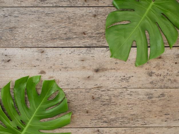 Folhas de plantas monstera, videiras sempre-verdes isoladas no fundo de madeira velho, vista superior