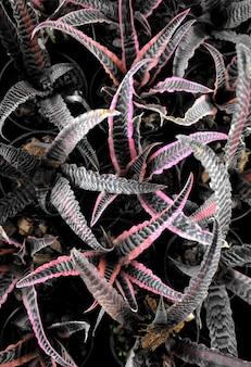 Folhas de plantas naturais textura abstrata de folhagem cryptanthus bromeliads aloe bromeliaceae aechmea