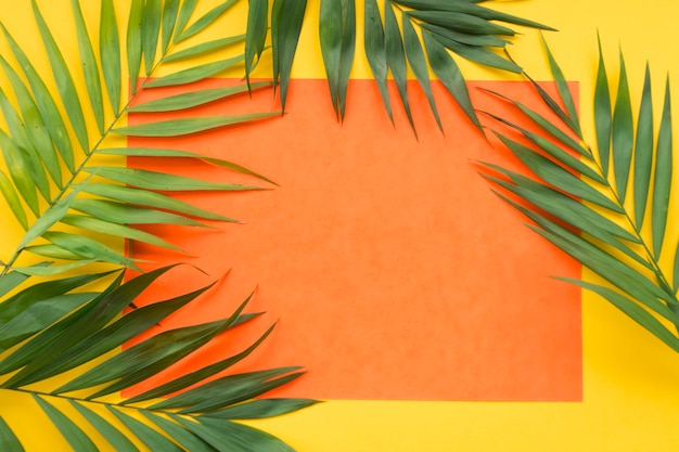 Folhas de plantas no quadro de papel laranja em branco sobre o fundo amarelo