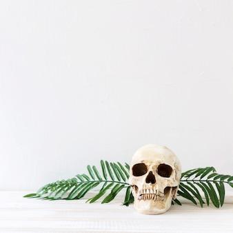 Folhas de plantas perto do crânio