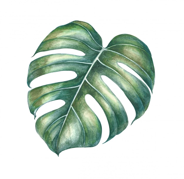 Folhas de plantas tropicais em aquarela.