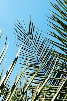 Folhas de plantas tropicais