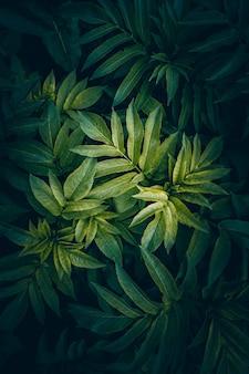 Folhas de plantas verdes e coloridas texturizadas no jardim no verão