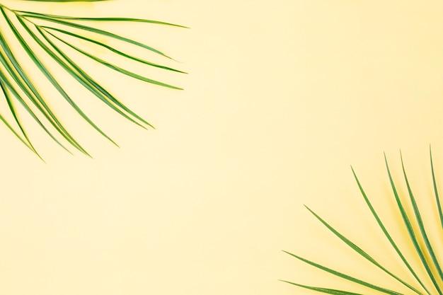Folhas de plantas verdes frescas