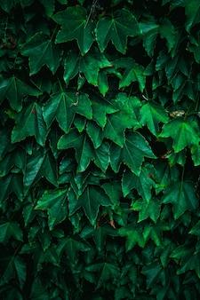 Folhas de plantas verdes na natureza na temporada de outono
