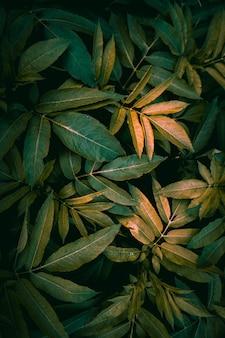 Folhas de plantas verdes na natureza no fundo verde da temporada de outono