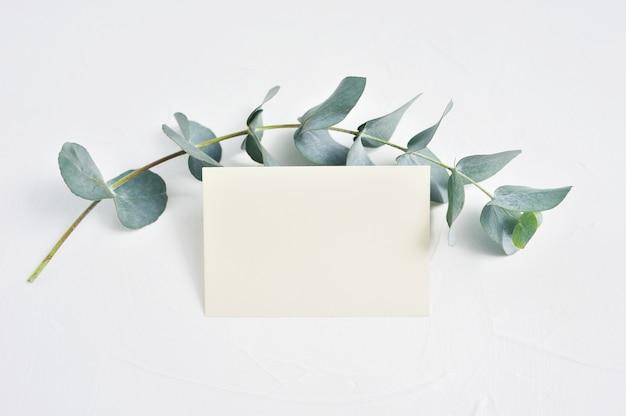 Folhas de ramo de eucalipto e cartão de papel em branco