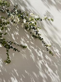 Folhas de ramos de flores brancas e sombras de luz do sol na parede bege neutra