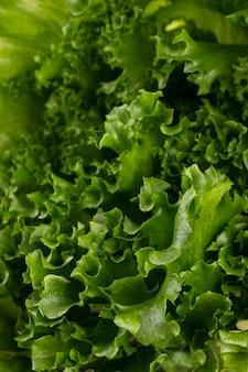 Folhas de salada bioalface isoladas