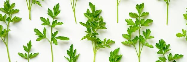 Folhas de salsa orgânica fresca, dispostas em uma fileira sobre um fundo branco. bandeira