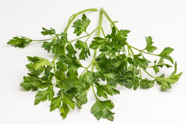 Folhas de salsa verde em fundo branco