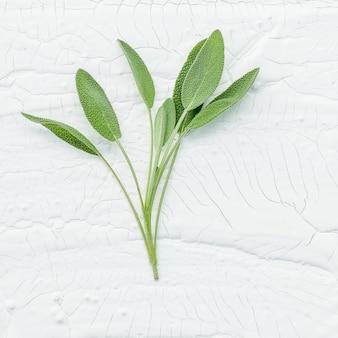 Folhas de sálvia frescas de ramo closeup