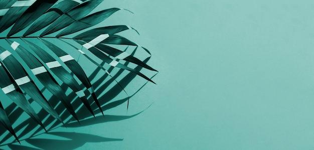Folhas de samambaia com fundo de espaço de cópia
