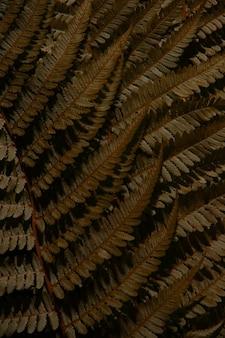 Folhas de samambaia de outono tropical marrom. textura.