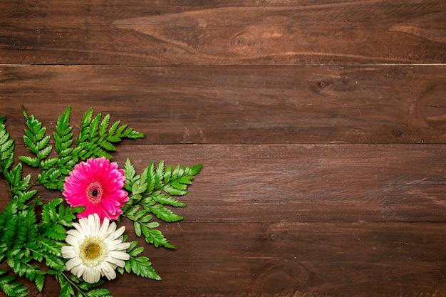 Folhas de samambaia e flores gerbera