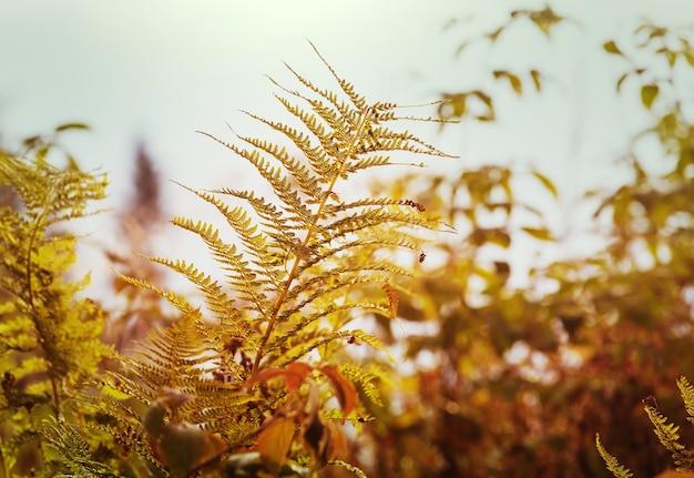 Folhas de samambaia em prado de outono