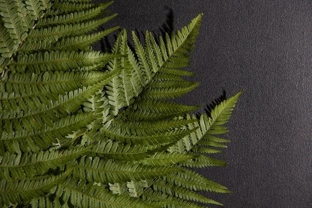 Folhas de samambaia em um fundo preto. papel de parede. textura