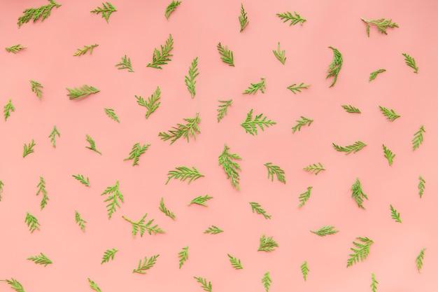 Folhas de samambaia em um fundo rosa