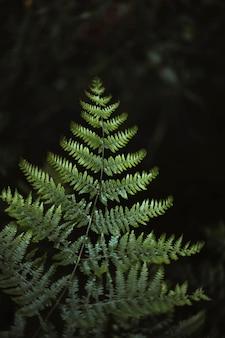 Folhas de samambaia na floresta temperada de mull