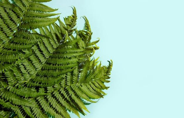 Folhas de samambaia sobre um fundo azul. copie o espaço