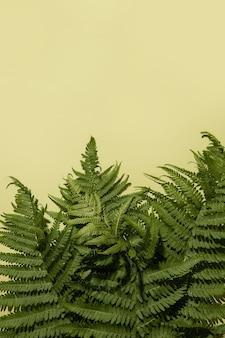 Folhas de samambaia sobre um fundo verde. copie o espaço