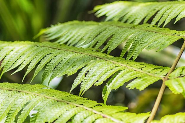 Folhas de samambaia verde brilhante na selva