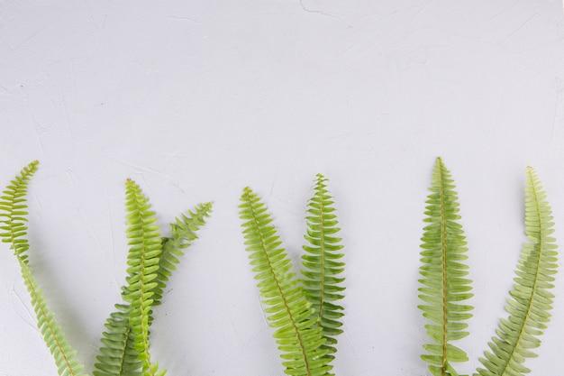 Folhas de samambaia verde na mesa de luz