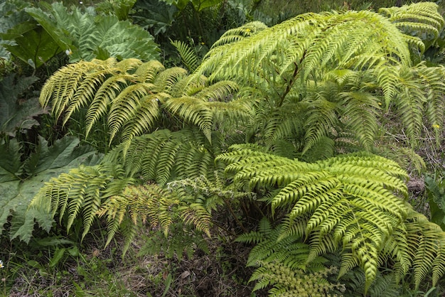 Folhas de samambaias verdes no parque durante o dia