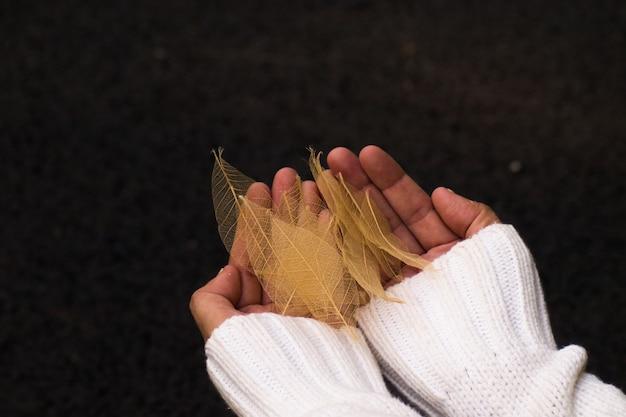 Folhas de selva de luxo transparência dourada