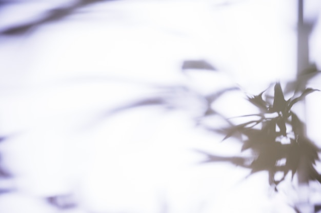 Folhas de sombra no fundo branco