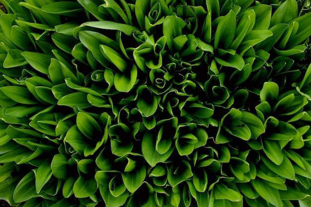 Folhas de uma planta no jardim